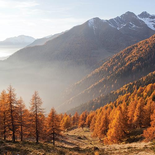Wald-Beitragsbild